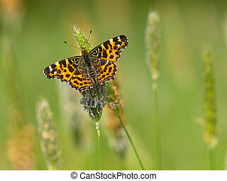 Butterfly Warming its Wings in the Sun - Beautiful Wild Map...