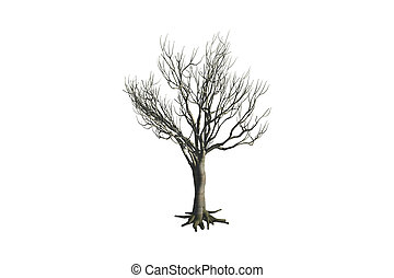 Dead Tree - Dead tree, isolated on white background.