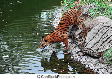 Tiger Indonesia - Tiger on the lake at Safari Park in...