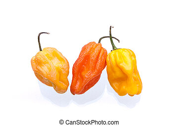 Orange and yellow Scotch Bonnet Chillies - Orange and yellow...