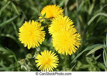 Wildblumen in ihrer natrlichen Umgebung
