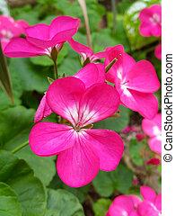 Fresh flower in garden