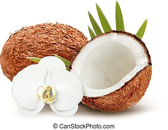 Coconut with leaves and white flower. Vector.