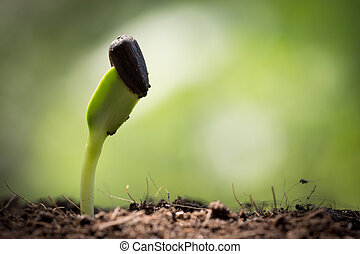 seed on soil and light in morning new life start concept