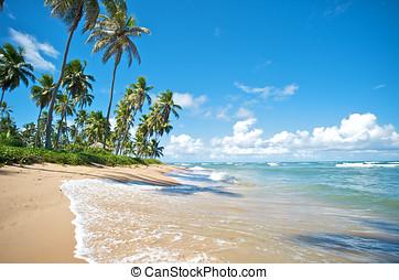 Salvador de Bahia, Brazil - Paradise beach in Praia do...