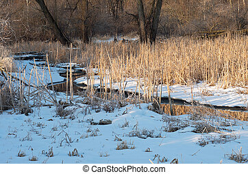 Creek and Reeds in Wildlife Refuge