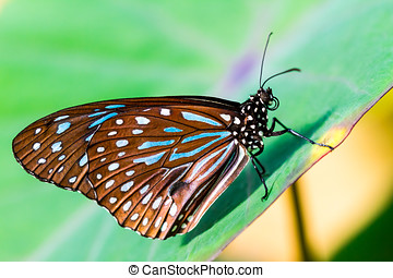 Monarch butterfly - Closeup of a Monarch butterfly with...