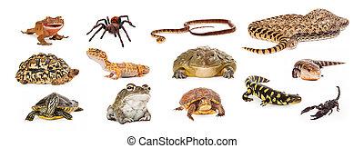 groupe, de, exotique, animaux familiers,