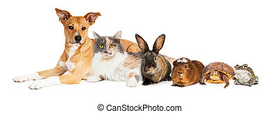 Row of Domestic Pets - Group of domestic animals including...