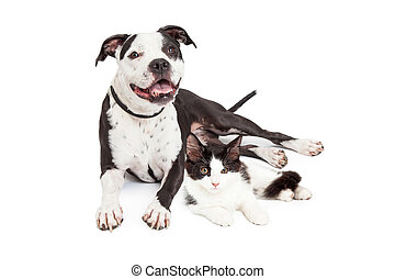 Happy Dog and Kitten Together - Smiling dog and cute kitten...