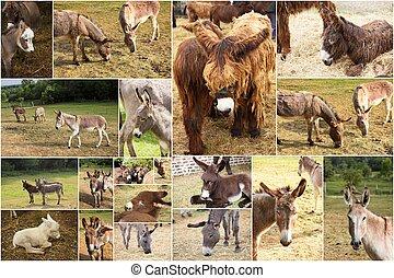 photo collage donkeys