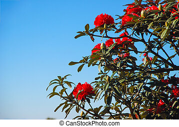Azalea blooming on tree - Azalea one of red flower blooming...