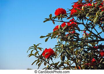Azalea blooming on tree - Azalea one of red flower blooming...