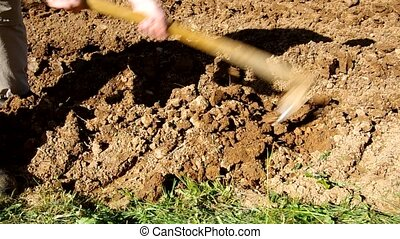 Hoeing soil - Hoeing the soil, preparing the soil for...