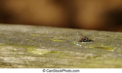 Fly on a wooden board and brown background.