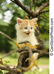 Cute kitten climbing tree and meowing funny - Cute small...