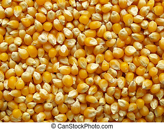 Maize or corn useful as a background