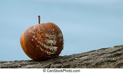 Rotten apple on blue background - Rotten and moldy fruit,...