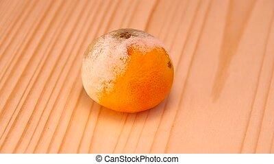 Mandarin moldy spins on the table