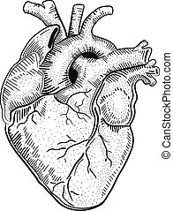 Heart a - Hand drawn vector illustration or drawing of a...