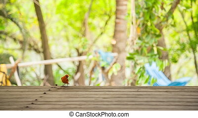 red fody bird on wood table in mauritius