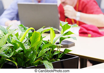 houseplant  - Houseplant in the office