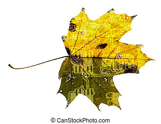 Maple leaf with printed circuit boa - Electronics Printed...