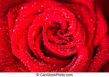 Red roses over valentines day - Red roses over valentines...