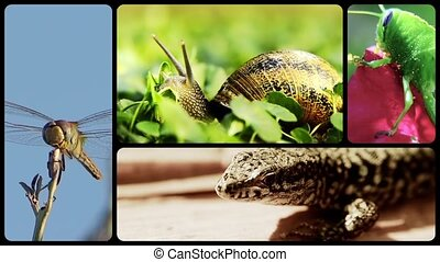 Small creatures - Small animals wildlife collage