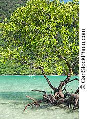 Mangrove plants growing in wetlands