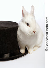 Rabbit playing with a magicians hat - Magical rabbit Closeup...
