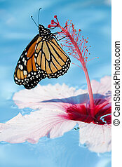Butterfly and Flower - A monarch butterfly resting on a...