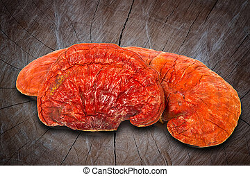 Lingzhi Mushroom Ganoderma Lucidum Isolated on wood...
