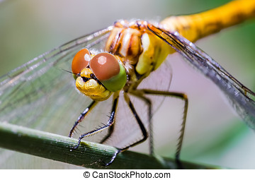 Dragonfly on Branch - Portrait of dragonfly on branch