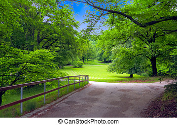 Green trees in park - Road receding past leafy green trees...