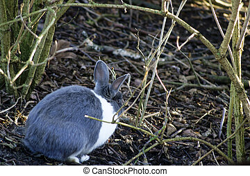 Wild rabbit - A wild rabbit hiding under a bush scrub....