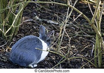 Wild rabbit - A wild rabbit hiding under a bush scrub....