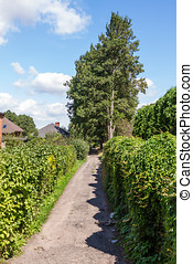 Tree lined path - A tree lined path or driveway