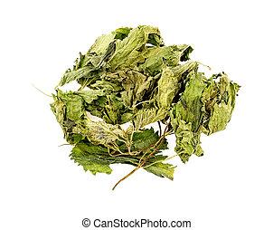 secado, urtiga, chá, folhas, isolado, ligado, branca,...