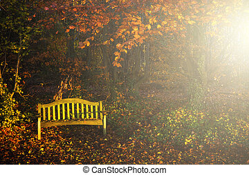 Quiet autumn - Empty yellow bench on a beautifully coloured...