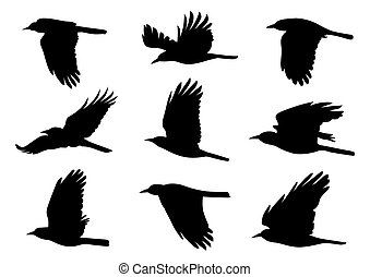 Birds in Flight Vector Illustration