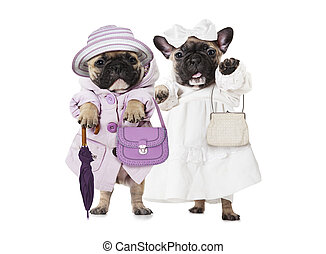 French bulldog puppies dressed as a dolls with hand bags -...