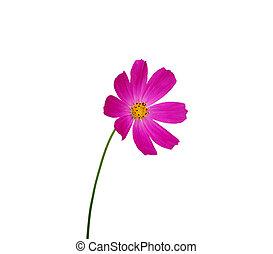 flower, ,