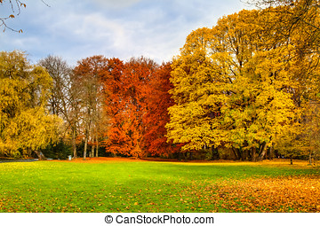 Autumn trees in park - Scenic view of colorful Autumn tree...