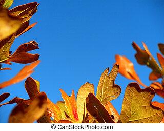 Fall Leaf Border 2 - Deep yellow scrub-oak leaves against a...