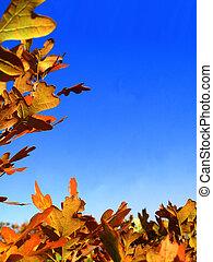 Fall Leaf Border 1 - Brilliant golden scrub-oak leaves...