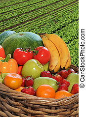 Fruit basket - Basket of fresh fruits and vegetables.