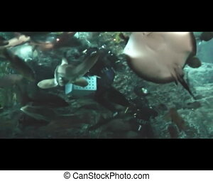 Diver feeding fish and sharks in the Oceanarium