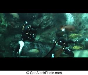 diver in oceanarium feeding fish