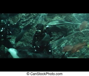 diver in oceanarium feeding fish - Diver feeding fish and...
